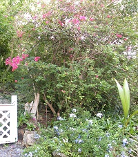 coral bay outlook greenery and flower